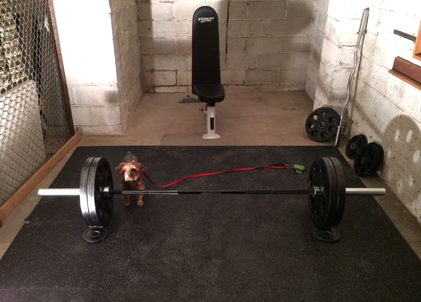 Project huge building a home gym buying the steel